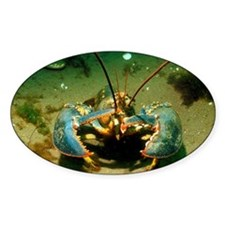 American lobster Decal