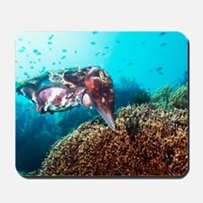 Broadclub cuttlefish about to lay eggs Mousepad