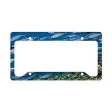 Bluestreak fusilier License Plate Holder