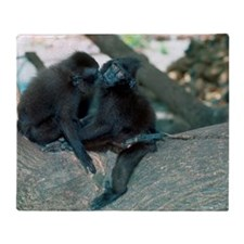 Captive crested black macaques Throw Blanket