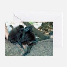 Captive crested black macaques Greeting Card