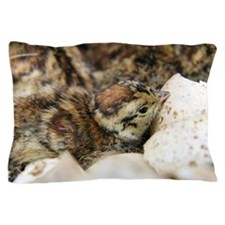 Black grouse chick Pillow Case