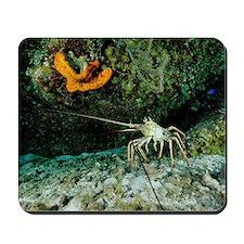 Caribbean spiny lobster Mousepad