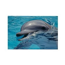 Bottlenose dolphin Rectangle Magnet