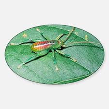 Bush-cricket nymph Sticker (Oval)
