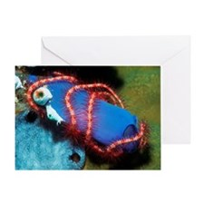 Brittle star wrapped round a sea squ Greeting Card