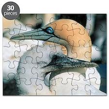 Cape gannets Puzzle