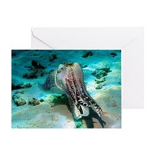 Broadclub cuttlefish Greeting Card