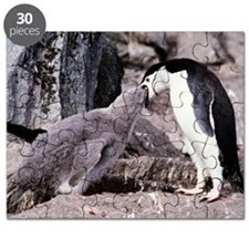 Chinstrap penguin feeding chick Puzzle