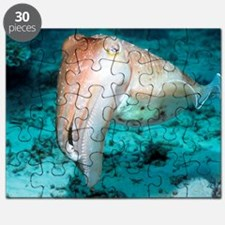 Broadclub cuttlefish Puzzle