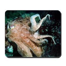 Broadclub cuttlefish Mousepad