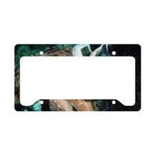 Broadclub cuttlefish License Plate Holder