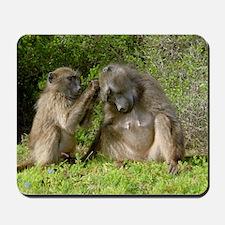 Chacma baboons grooming Mousepad