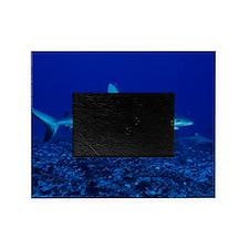 Bull shark Picture Frame