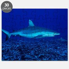 Bull shark Puzzle