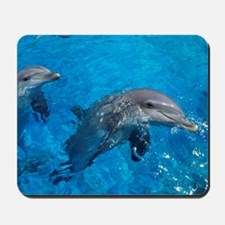 Bottlenose dolphins Mousepad