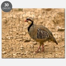 Chukar Puzzle