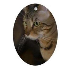 Unique Brown tabby cat Oval Ornament