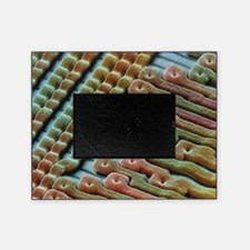Coloured SEM of surface of an EPROM  Picture Frame