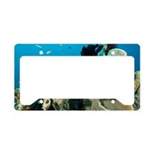 Commerson's frogfish License Plate Holder