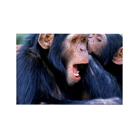 Chimpanzees grooming Rectangle Magnet