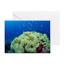 Coral Greeting Card