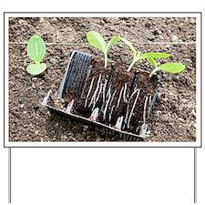 Courgette seedlings Yard Sign