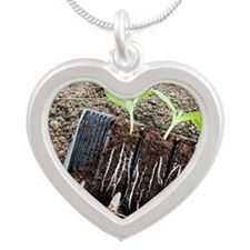 Courgette seedlings Silver Heart Necklace