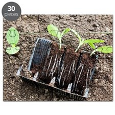 Courgette seedlings Puzzle