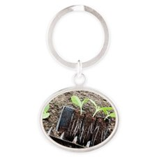 Courgette seedlings Oval Keychain