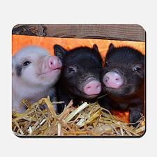 3 Little Pigs Mousepad