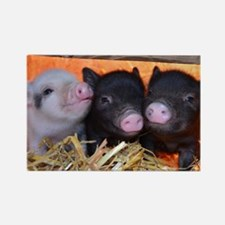 3 Little Pigs Rectangle Magnet