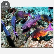 Creole wrasse at a cleaning station Puzzle