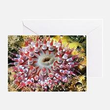 Dahlia anemone Greeting Card
