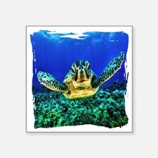 "aquatic sea turtle Square Sticker 3"" x 3"""