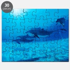 Dolphins in captivity Puzzle