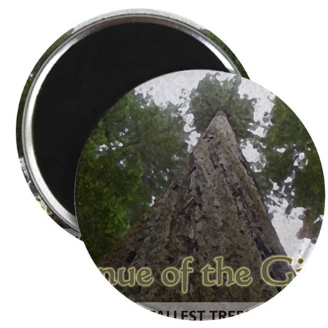 Founder's Tree - Avenue of the Giants Magnet