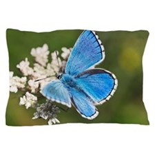 Adonis blue butterfly Pillow Case