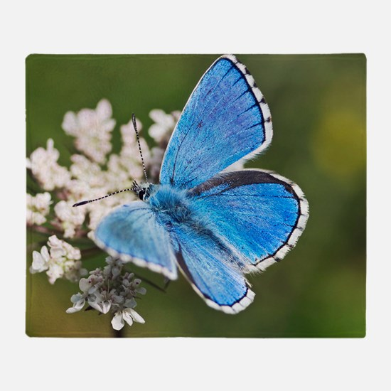 Adonis blue butterfly Throw Blanket