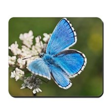 Adonis blue butterfly Mousepad