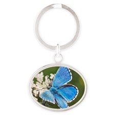 Adonis blue butterfly Oval Keychain