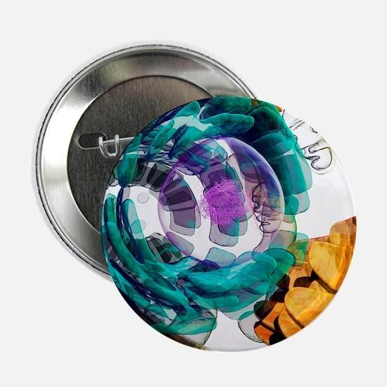 """Animal cell, artwork 2.25"""" Button"""