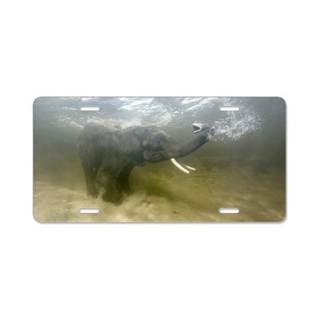 African elephant swimming Aluminum License Plate