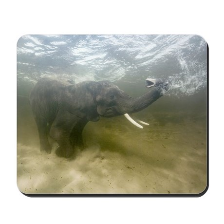 African elephant swimming Mousepad