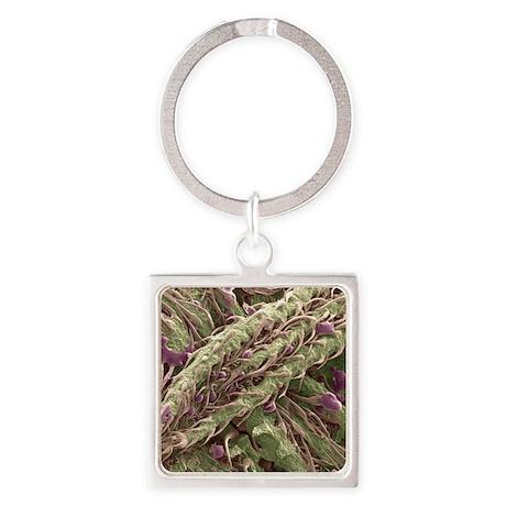 Cannabis plant, SEM Square Keychain