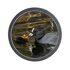 Adult coot feeding its chick Wall Clock