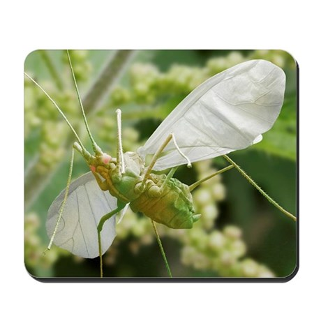 Aphid in flight Mousepad