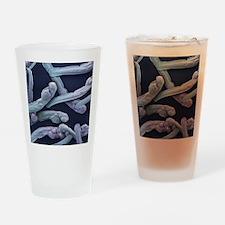 Zebrafish young, SEM Drinking Glass