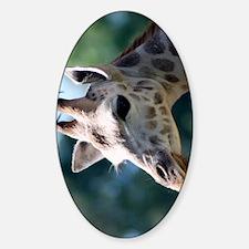 Rothschild Giraffe iPhone 3G Case Decal