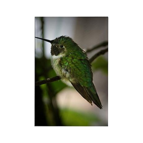 Tiny Hummingbird Rectangle Magnet